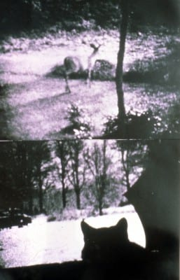 Carolee Schneemann, Kitch's Last Meal, 1973–76, Super 8mm film, double projection, vertical, sound on cassette, ca. 5 hrs., two installation views (artwork © Carolee Schneemann; photographs provided by the artist)