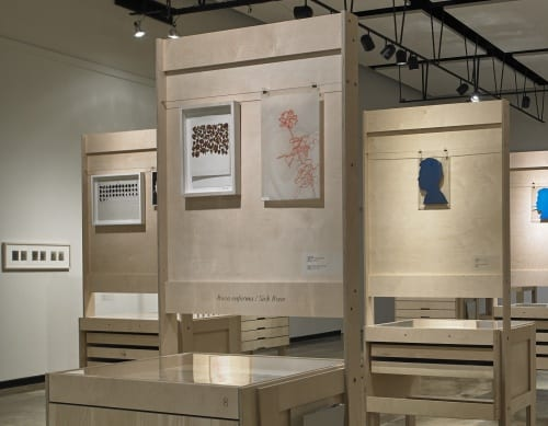 View of cabinets displaying the documents and works in the Roberto Obregón Archive