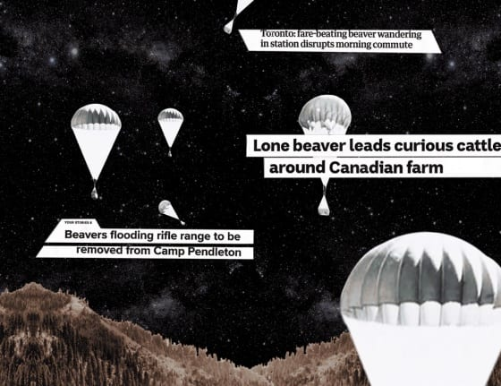 Screenshot from animated GIF of black-and-white photos of beaver boxes being parachuted in and various beaver-related headlines over collage of dark, starry night sky and tree-covered hills in background. Small inset film shows some cows surrounding a beaver.