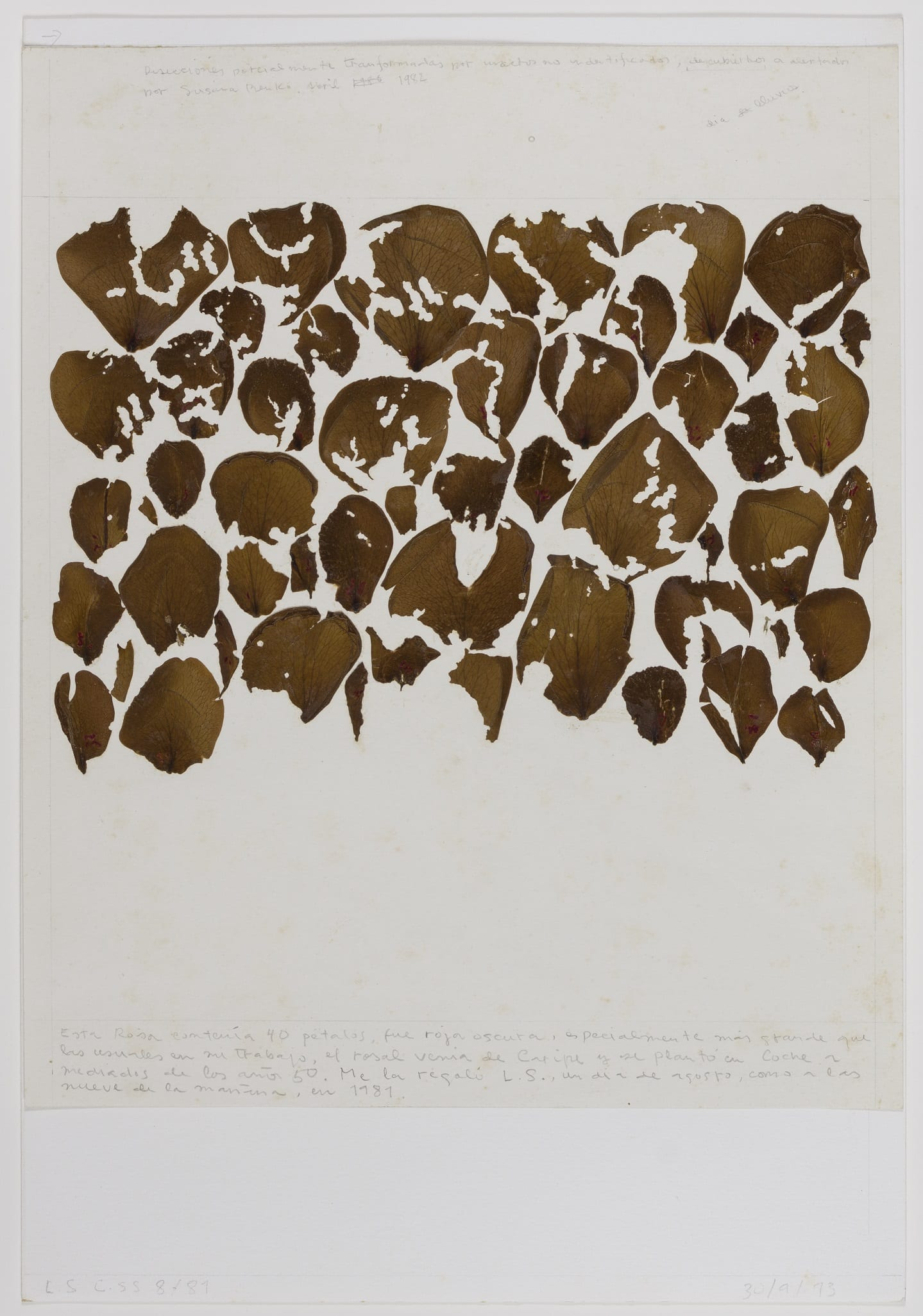 Collage with forty dried rose petals glued to paper with handwritten notes by the artist