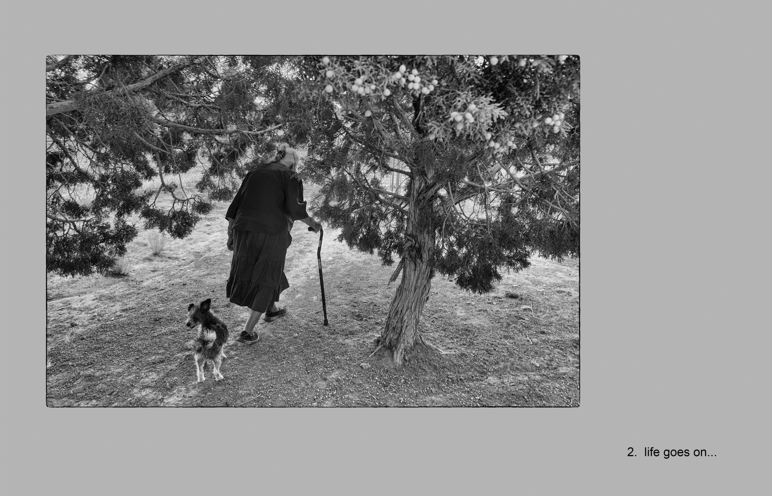 Black-and-white photo showing a matriarch from the Big Mountain region of the Navajo nation; she wears a skirt and walks with the aid of a cane as she moves away from the camera and passes under a tree; she is followed by a small dog who stops to look back for a moment